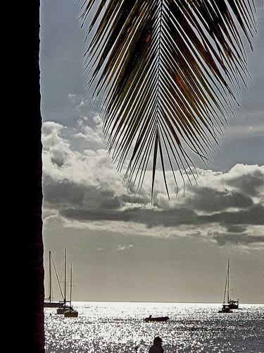carribeanbeach palm placetovisit carribeanview sun sea islandlife palmtree trip guadeloupe malendurebeach sunreflection guadeloupeforever placetosee carribeancolours carribeanlifestyle placetobe nature karukera malendure gwada guadeloupeiloveyou lifestyle sand carribeansunset malendurebouillante sunnysky sunset beach contrejour bouillanteguadeloupe travel