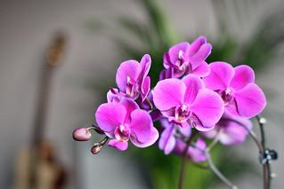Flowers and Faith
