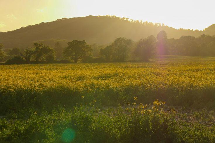 malvern_HIlls_farmland