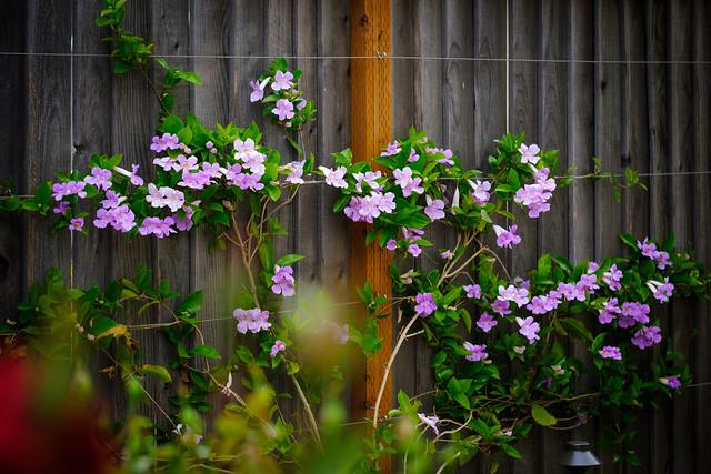 Spring 4807