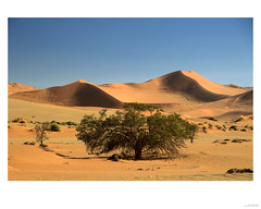 Sand dunes near Deadvlei