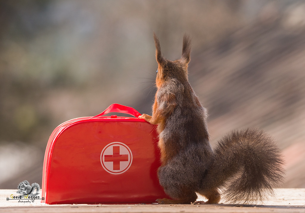 red squirrel with an Emergency Suitcase
