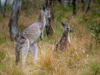 Wet Roos | by __db_