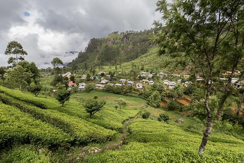 srilanka asia canon landscape nature dambatenne dambatenneteaplantation tea teaplantation green clouds haputale village