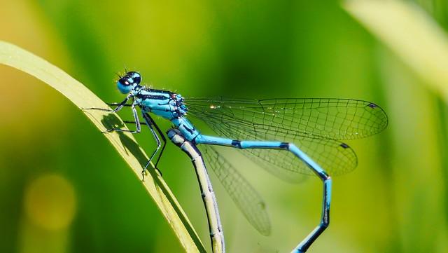 dragonfly - 5138