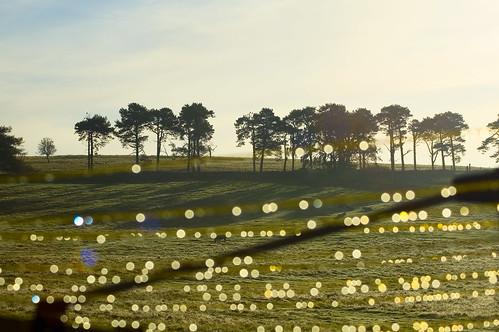 trees horses field sunrise d50 scotland nikon aberdeenshire dew balloch alford shetlandponies cairnballoch stronehill