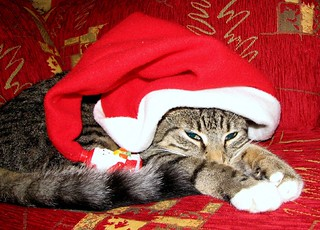 Santa Cat | by Maree A Reveley Photography