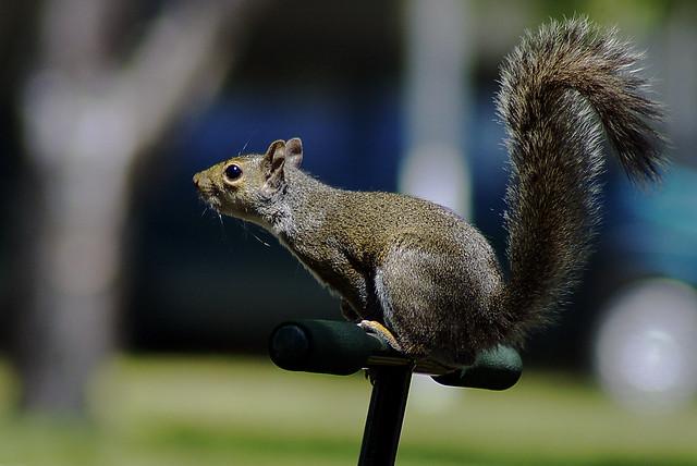 Squirrel-On-A-Pole